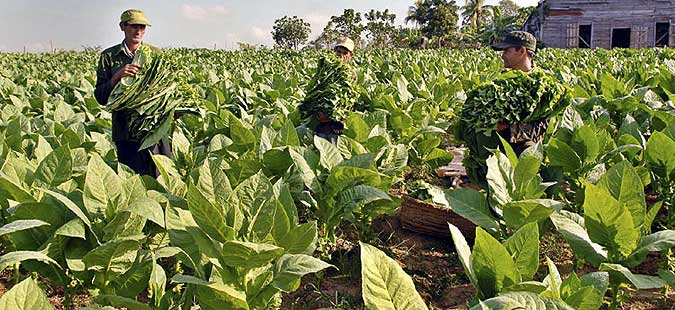 Finance Ministry pays vine and tobacco growers, gardeners' subsidies