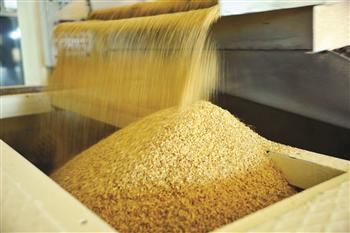 Biosecurity Board suspends entry of 26 GMOs to Turkey