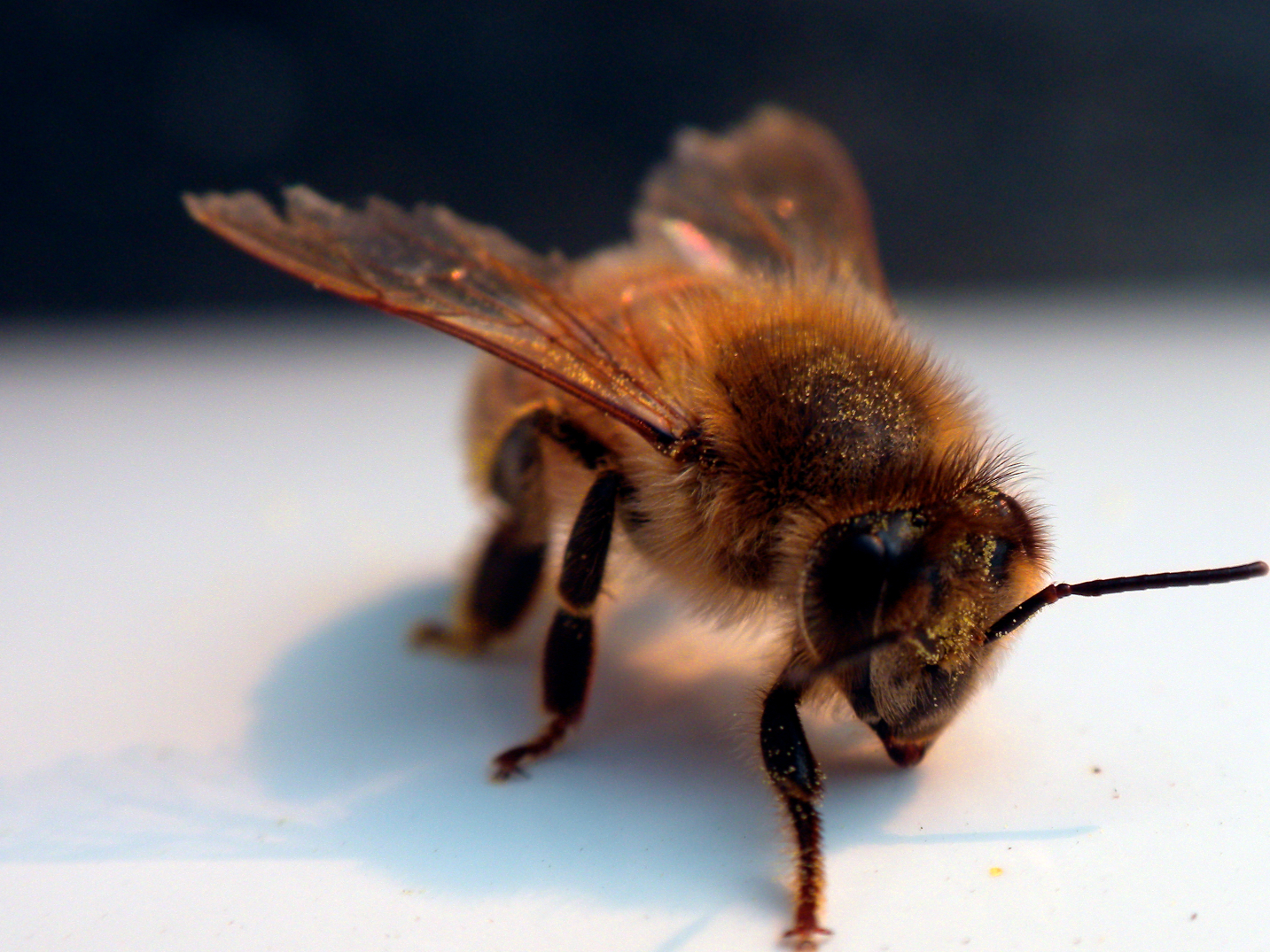 After protests by beekeepers, Bulgaria to back EU ban on some pesticides
