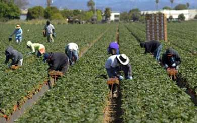 Migrant workers shot by bosses at Manolada farm