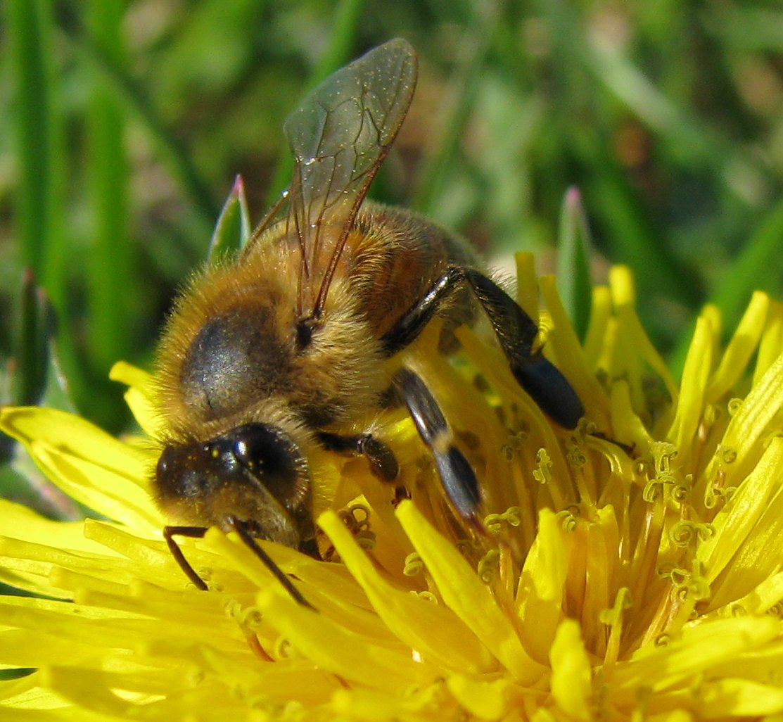 Bulgarian beekeepers protest against pesticides
