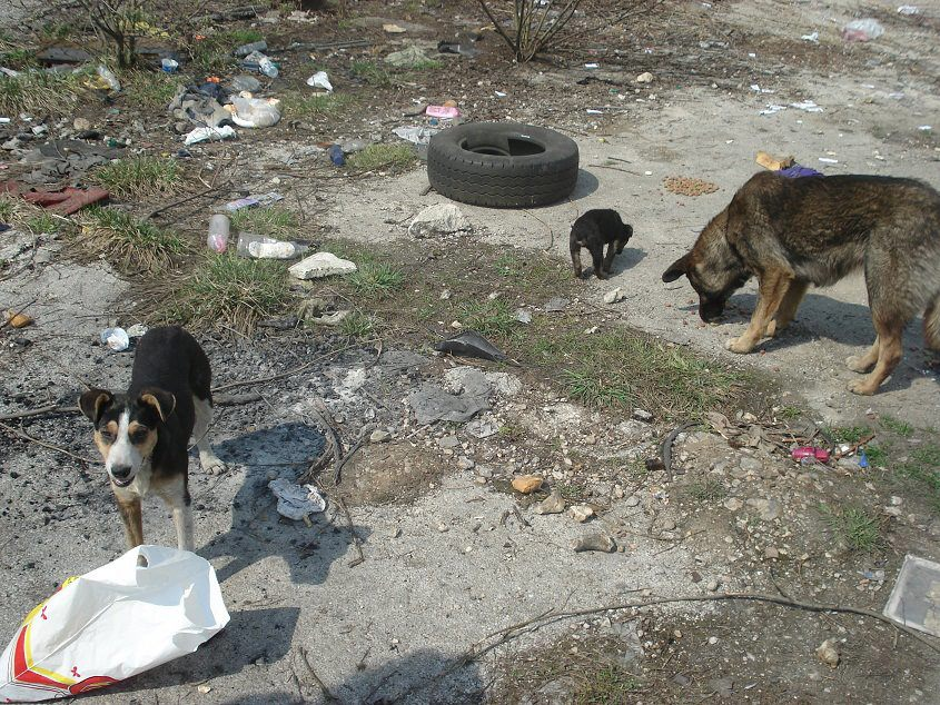 Sarajevo Canton Agreed on a Solution to Permanently Solve the Long-Standing Problem of Stray Dogs in Sarajevo