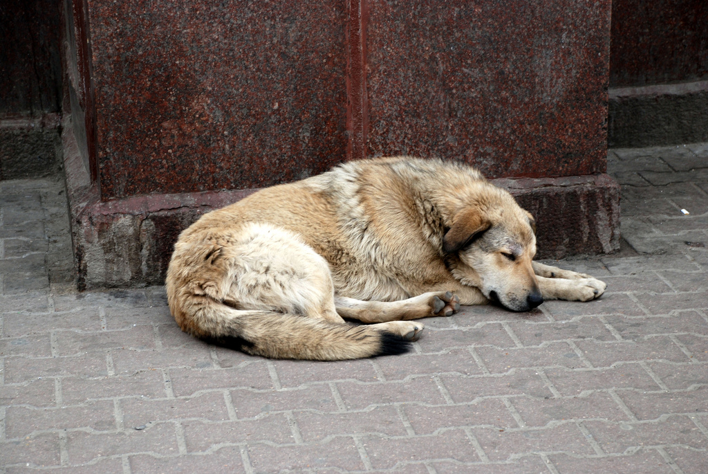 Problem of Stray Dogs in Bosnia-Herzegovina Remains Unresolved