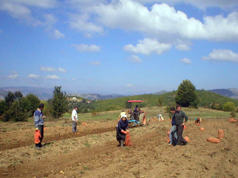 """Albanian farmers are invited to benefit from """"IPARD-like"""" funds"""