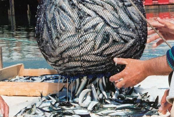 Fishing in Montenegro – not ready for the European Union