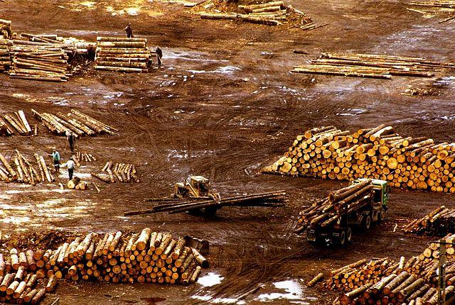 Amendments pave way to massive deforestation in Romania