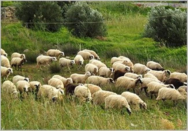 Bluetongue disease has killed 3000 animals in Bulgaria
