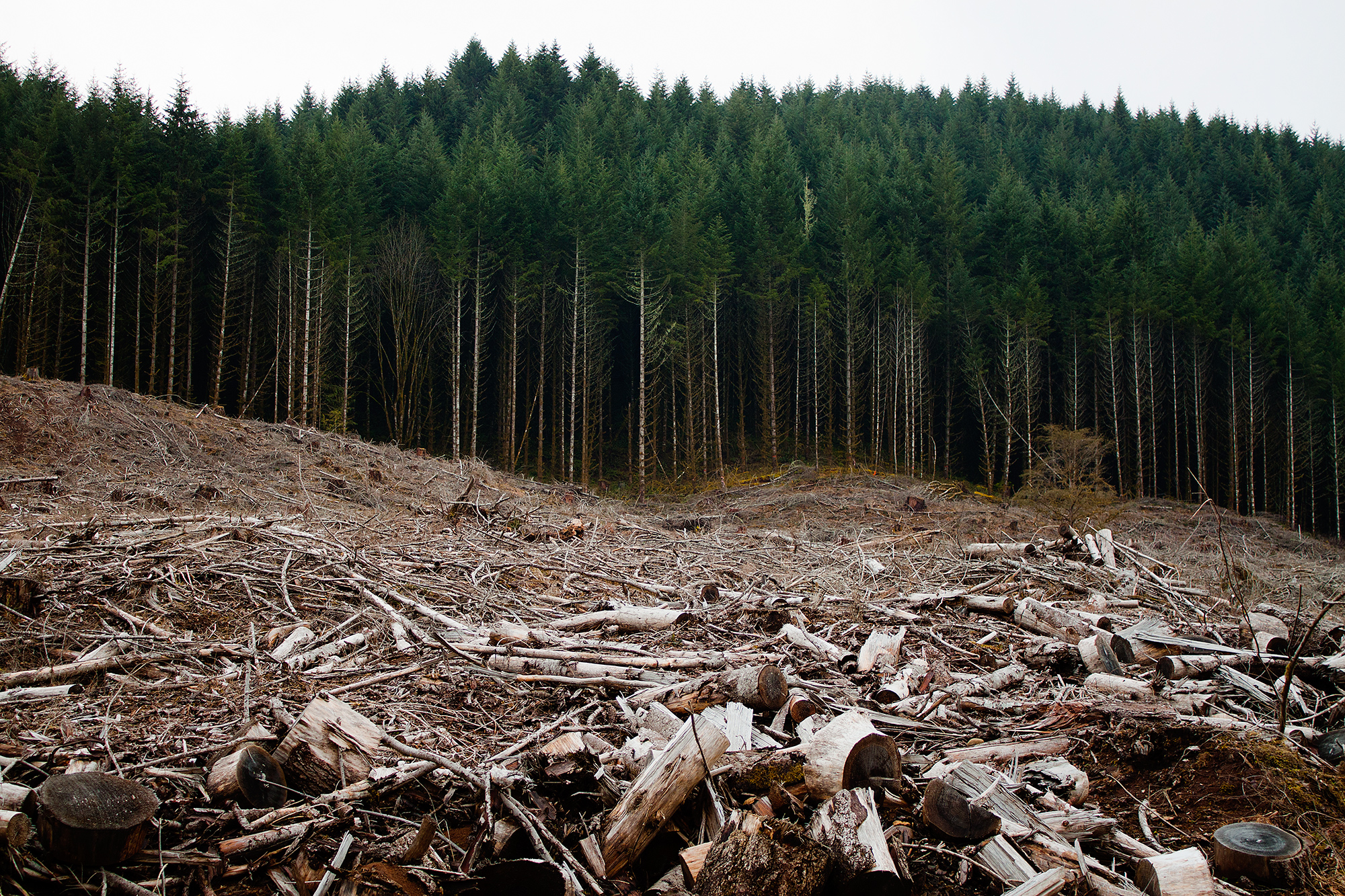 AmCham Romania warns against amendments to the Forestry Code