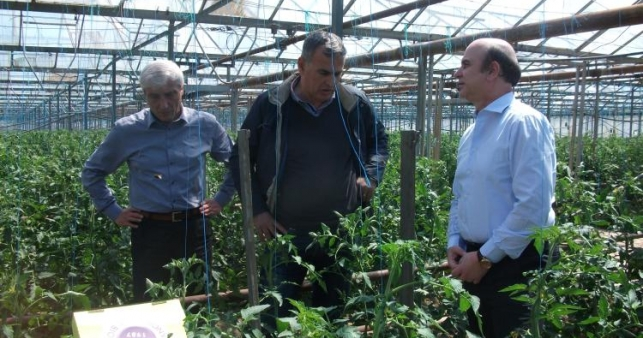 Weight of agriculture in the Albanian economy increases