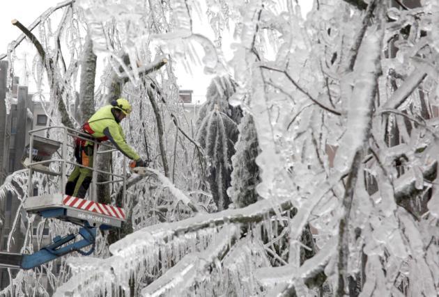 Slovenian Govt plans to establish a Forest Management Company