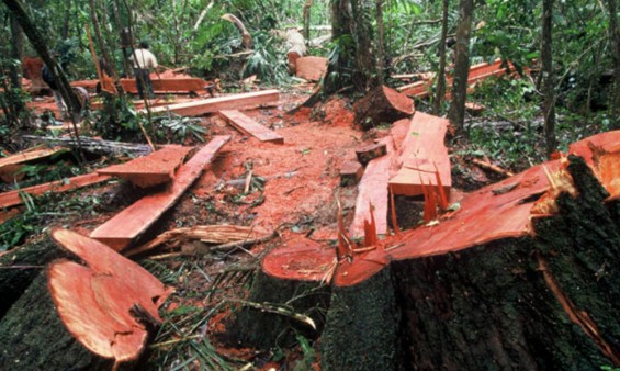 Romania puts illegal deforestation on its national security agenda