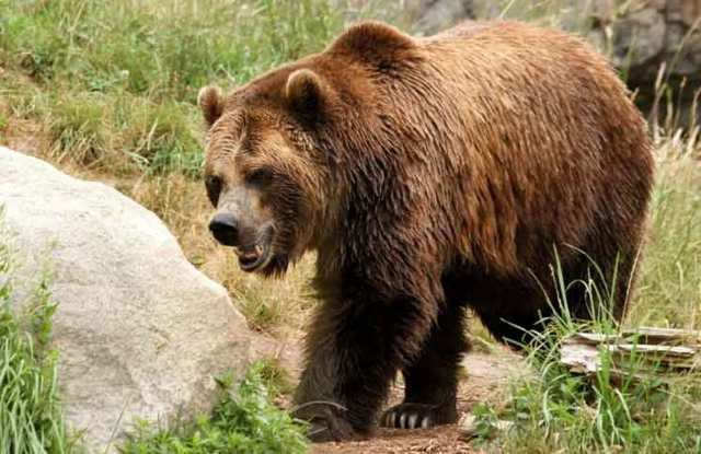 Boy in Albania attacked by the bear, he fights with death in a precipice