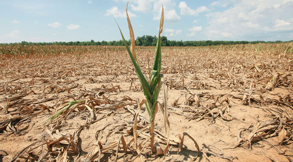 After the year of floods came the year of drought