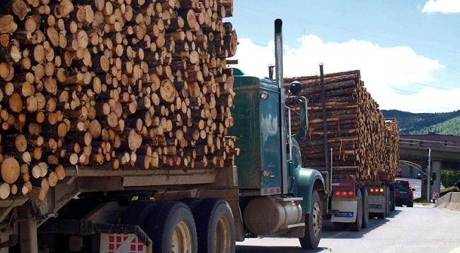 No wood cutting will be allowed in Albania for a period of 10 years