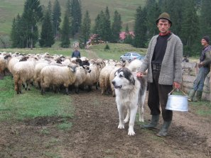 Romanian lawmakers take control over shepherds' dogs