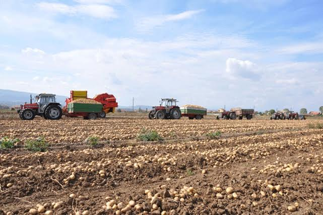 Joint agricultural businesses on the border