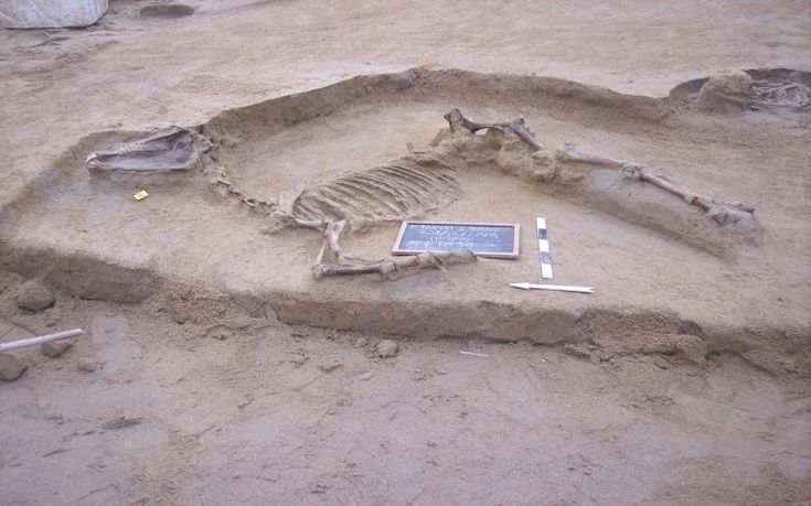 Horse burial discovered in Faliro