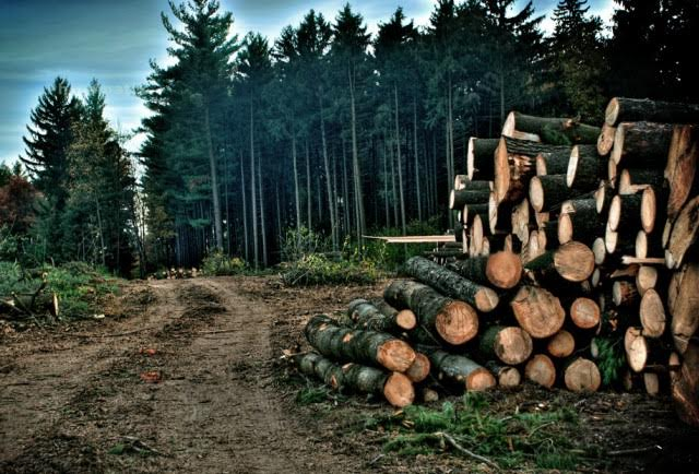 Moratorium, wood cutting in Albania is prohibited for the next ten years