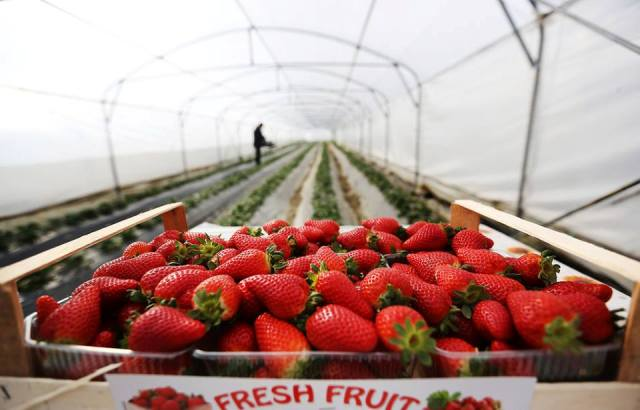 Albania sees development of agriculture as an alternative to stop emigration
