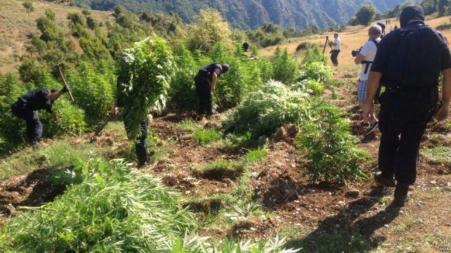 USA: Albania is the main producer of marijuana in Europe