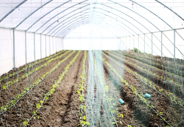 The government's offer to boost agriculture