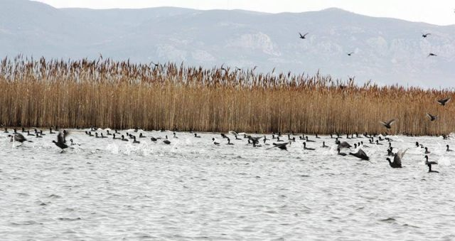 Hunting for 193 water and land birds in Albania outlawed