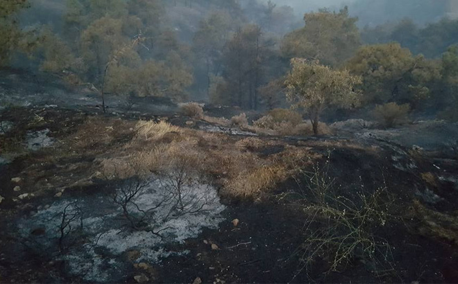 Huge fire in Solea region under control, Minister of Agriculture tells