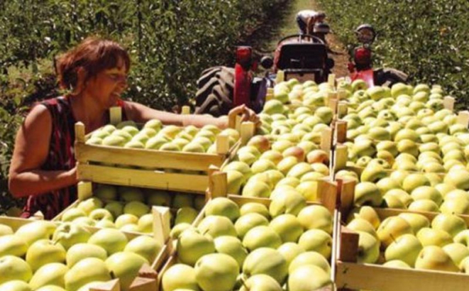 BiH fruits and vegetables still without license for the Russian market