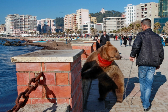 IBNA Reportage/Cruel treatment of bears in Albania