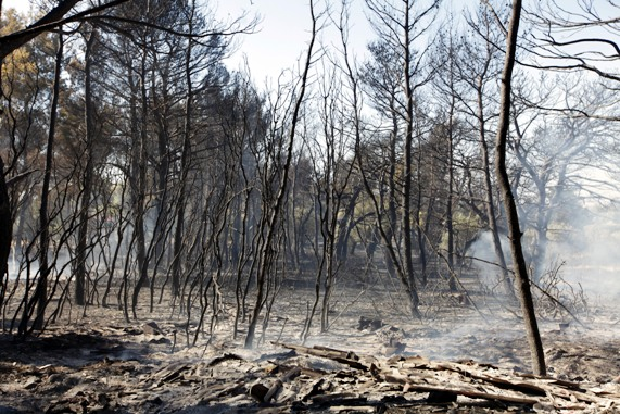 Race against time to protect burnt forests from erosion and flooding