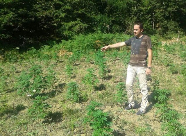 Rare/Opposition denounces the cultivation of narcotics live from the plots