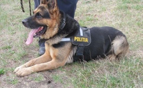 Canine teams dispatched to detect illegal migrants in border areas of Giurgiu County