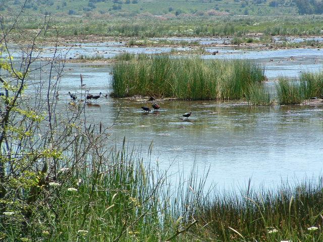 Turkey's loss of wetlands exceeds size of Marmara over last 60 years: Report