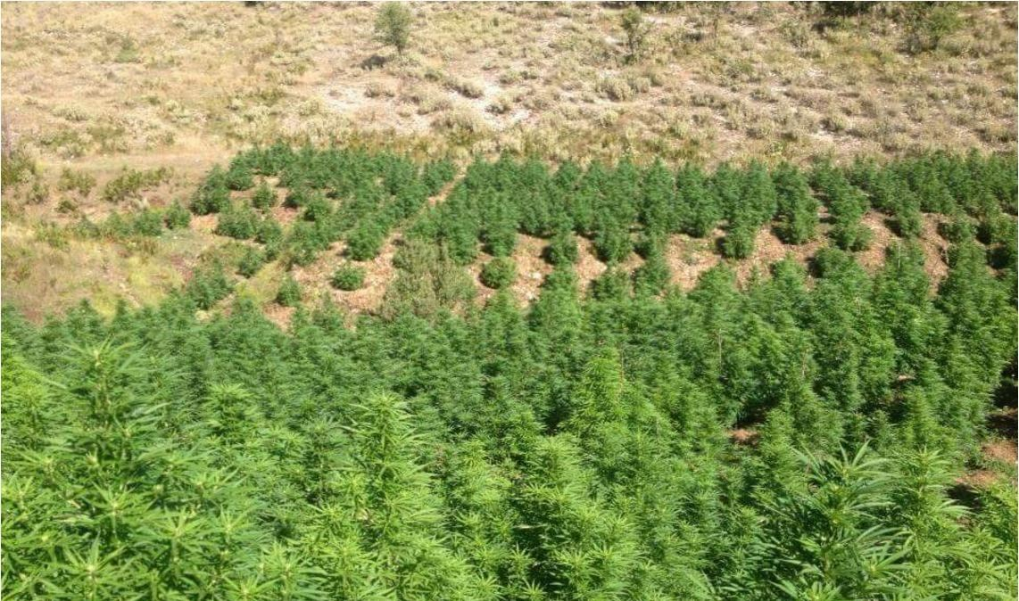 Air monitoring reveals thousands of cannabis plantations in the Albanian territory