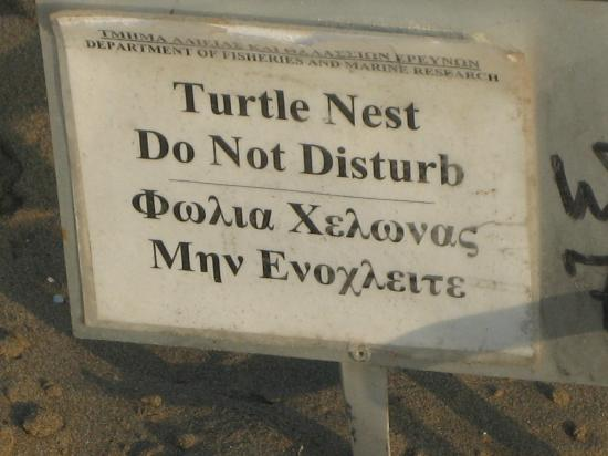 Program for the protection and management of sea turtles in Cyprus