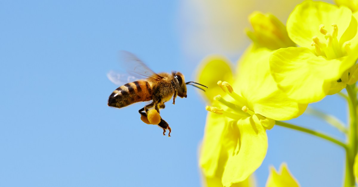 The UN General Assembly declares May 20 as the World Honey Bee Day