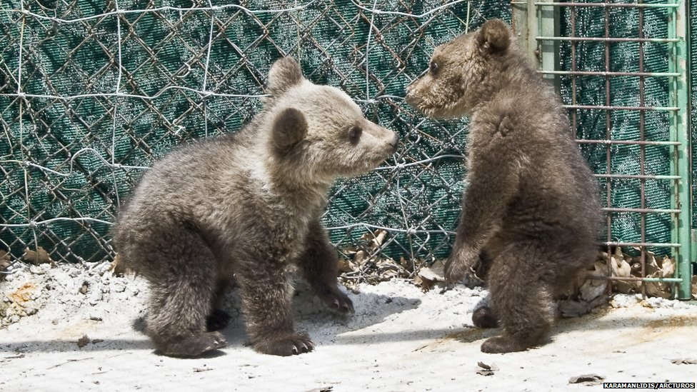 Arcturos & 'Animal Rescue Albania' save cub from internet sale