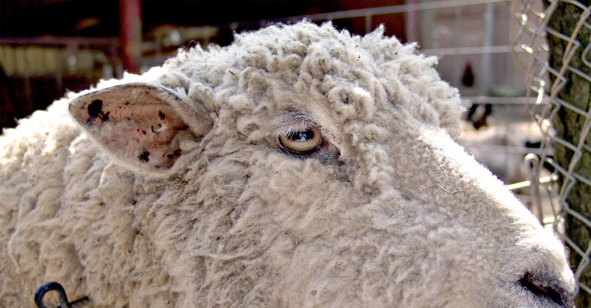 Bulgarian food safety agency head: Killing flocks 'saving business a billion leva'