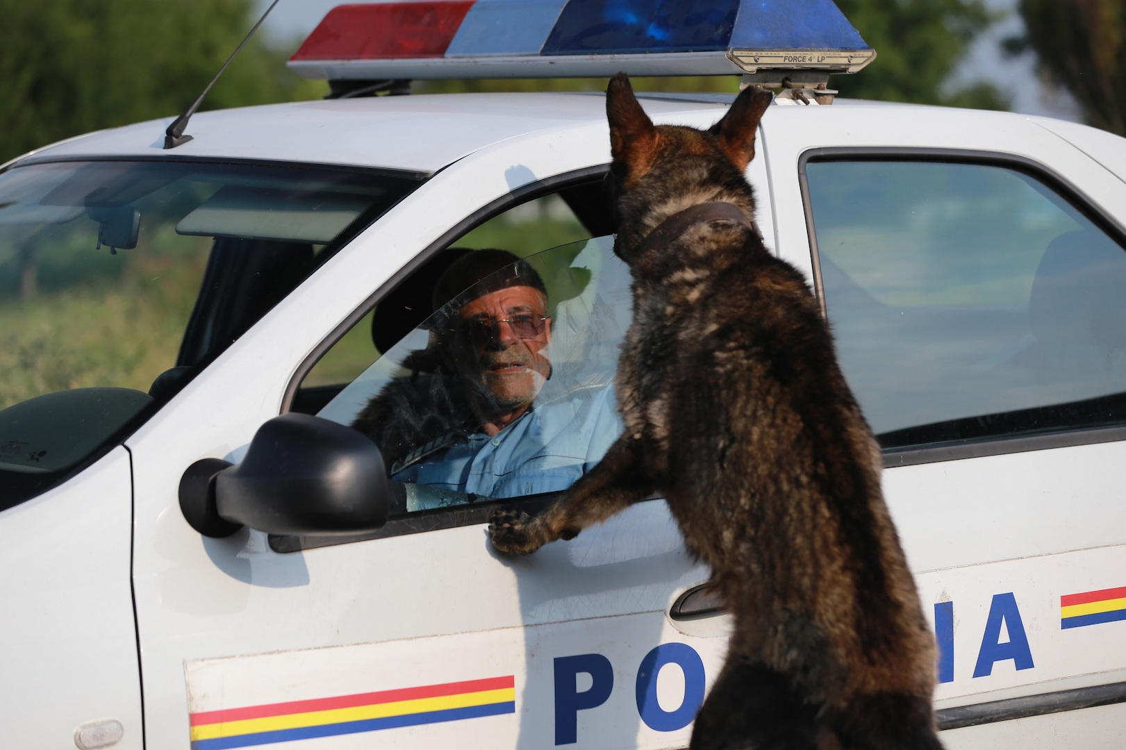 Romania: Service animals like dogs and horses used by police, military to receive state 'pension'
