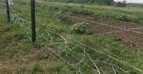 Bulgarian Forestry Agency chief resigns over Romanian border fence 'conflict of interest'