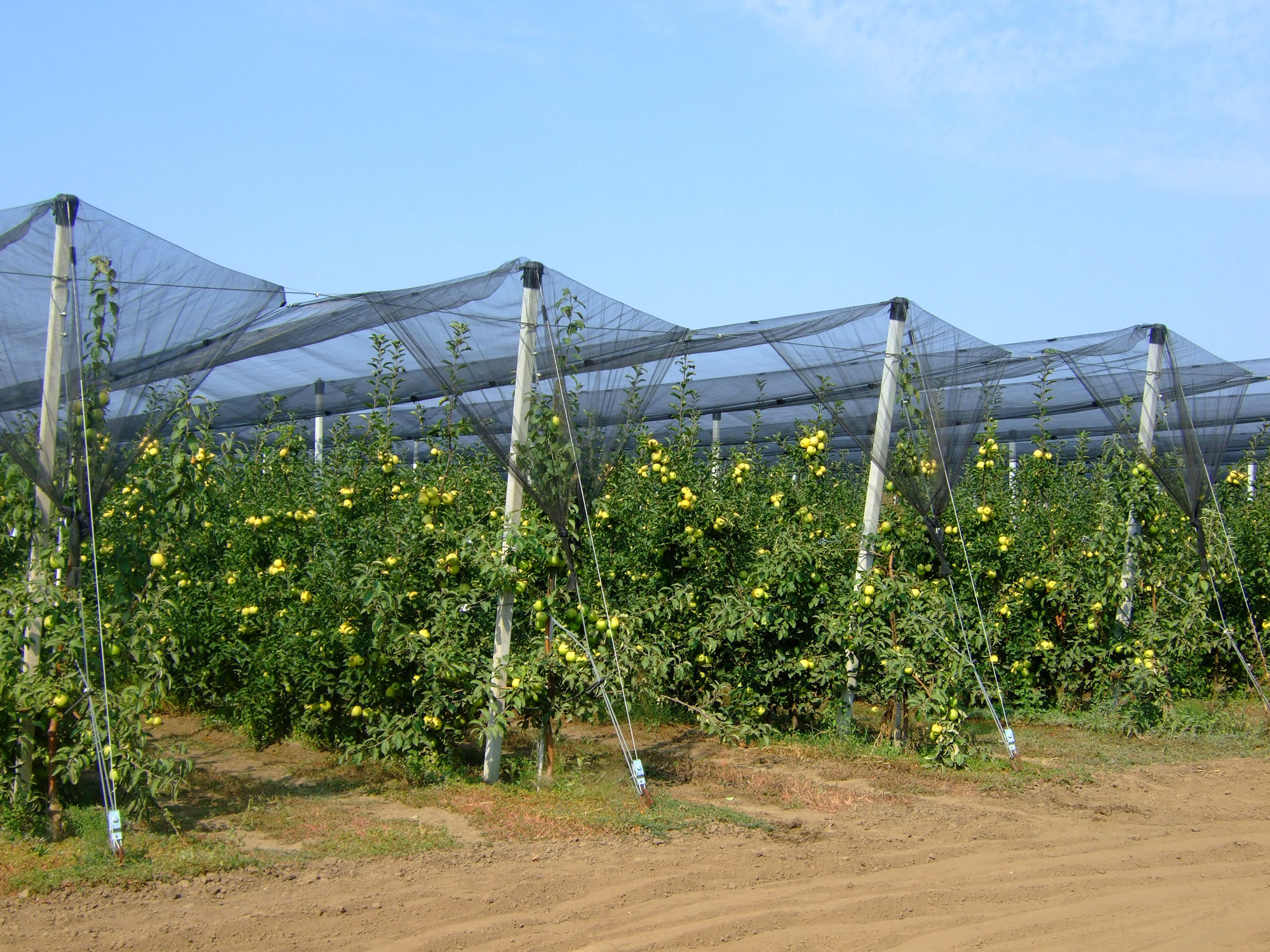 Serbian Smart Watering's solution irrigates the country'slargest orchard