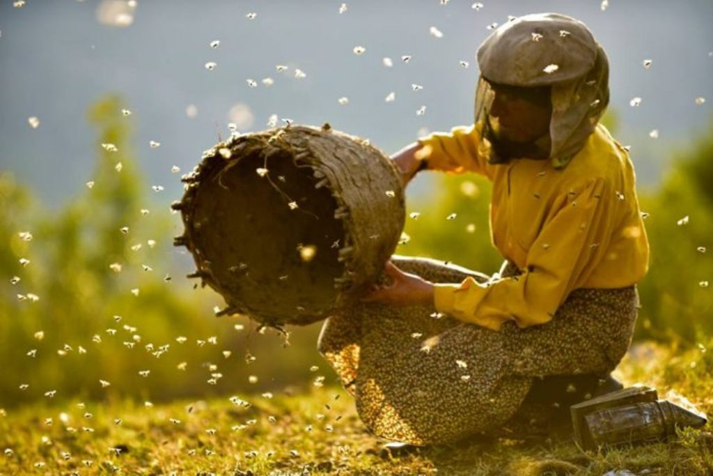 Honeyland film is awarded the first prize in the American film festival Sundance