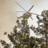 Turkey: Eight killed by forest fires