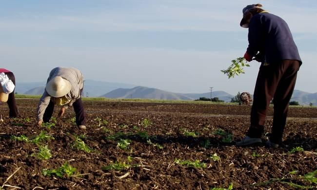 Κύπρος: Νέα μέτρα στήριξης του αγροτοκτηνοτροφικού τομέα ανακοίνωσε ο Καδής