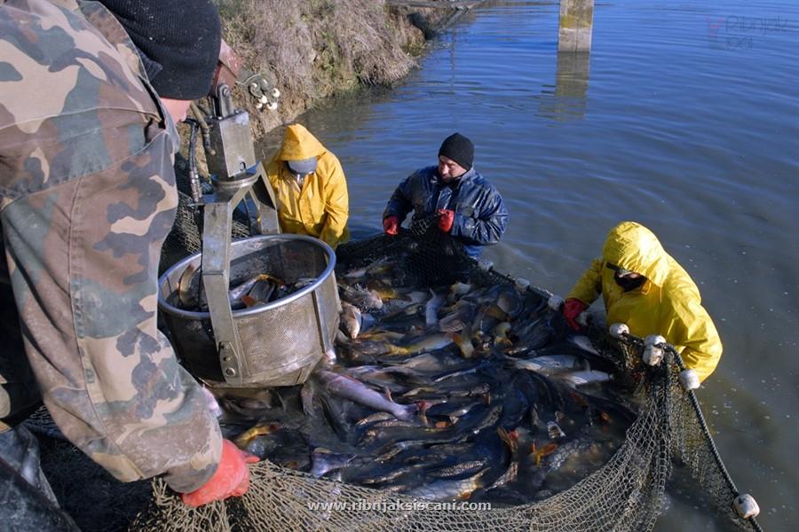 Β-Ε: Όλα έτοιμα για την εξαγωγή ψαριών από τη Β-Ε στη Ρωσία