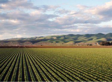 Βουλγαρία: Η αισιόδοξη προοπτική της βουλγαρικής γεωργίας