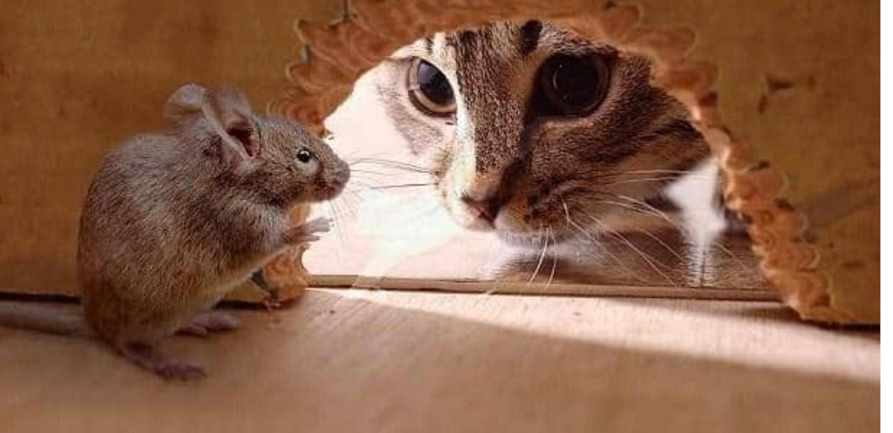 Stav: Merkel je zamka, Erogan mačka a Mitsotakis je miš